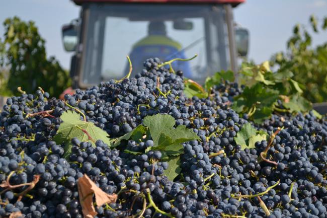 Молдавия заработала более миллиарда долларов в прошлом году на экспорте агропродукции