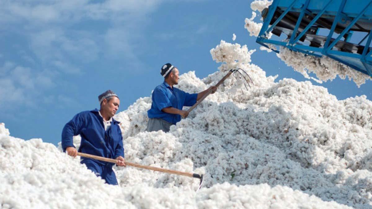 Узбекистан прекращает экспорт хлопка-сырца