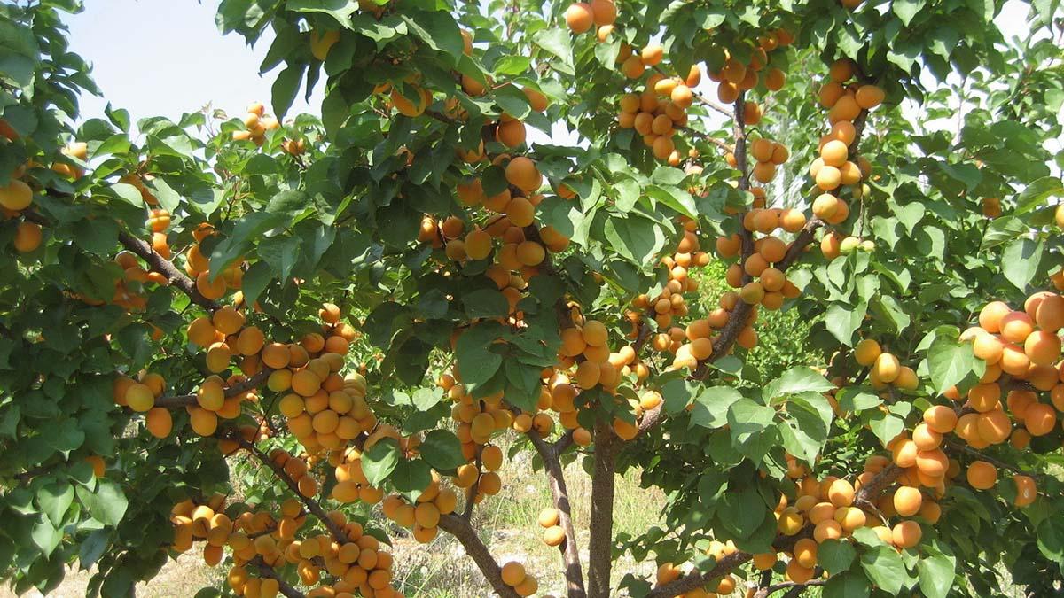 Всемирный банк поддержит сельское хозяйство Узбекистана