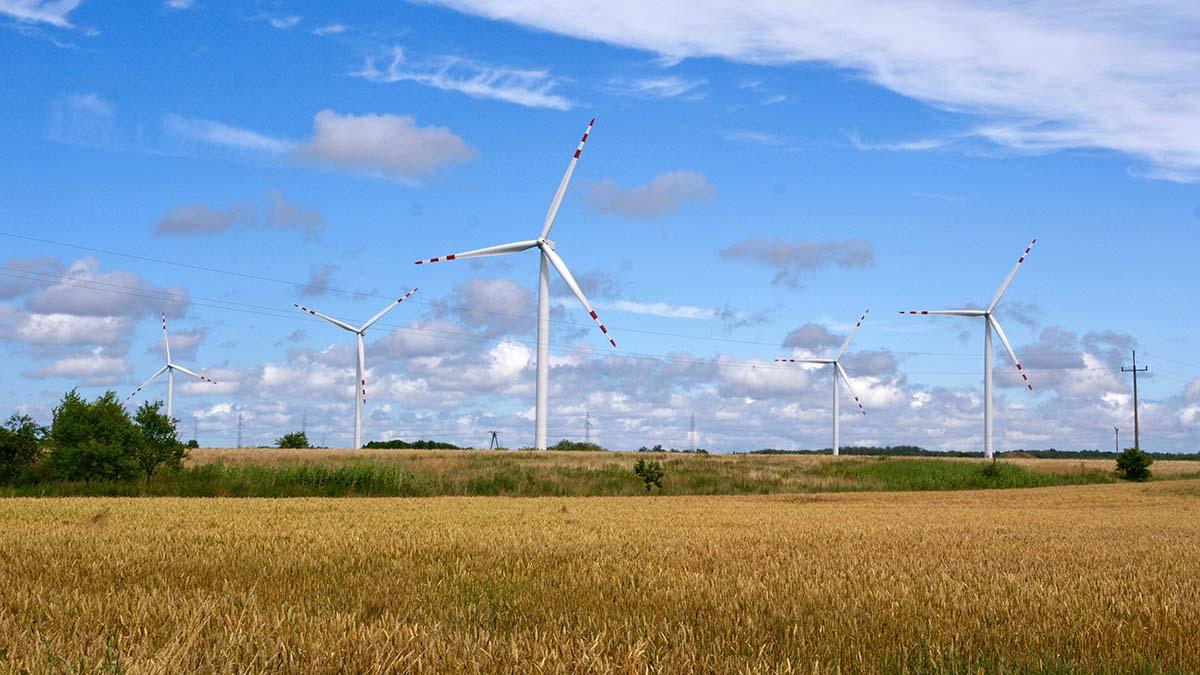 Первый ветропарк на Балтике