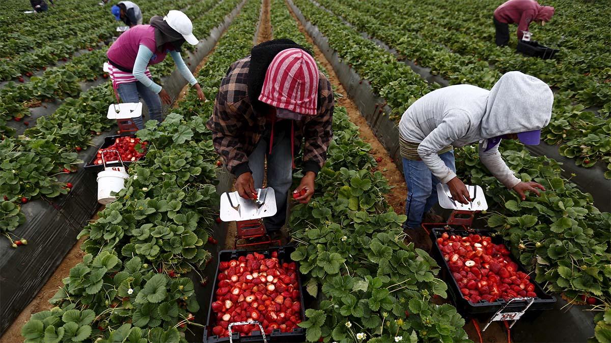 Чехия открыла границы для сезонных работников