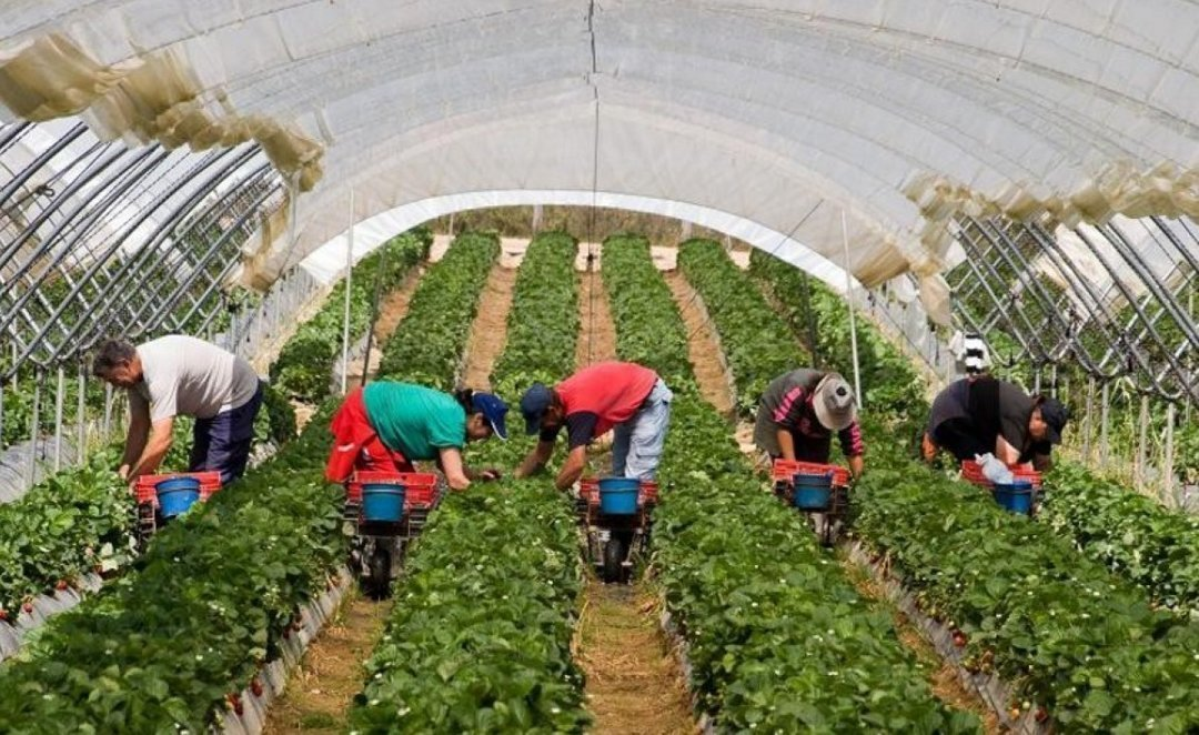 Число иностранных рабочих в Румынии достигло рекордного уровня